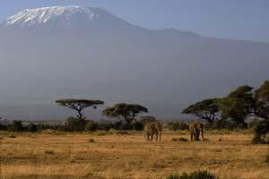 Виза в Кению самостоятельно