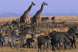 Виза в Танзанию самостоятельно